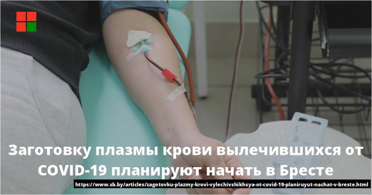 Заготовку плазмы крови вылечившихся от COVID-19 планируют начать в Бресте 1