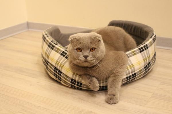 Передержка кота – на что обратить внимание