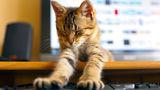 Ученые: Кошачьи царапины вызывают расстройства психики 1