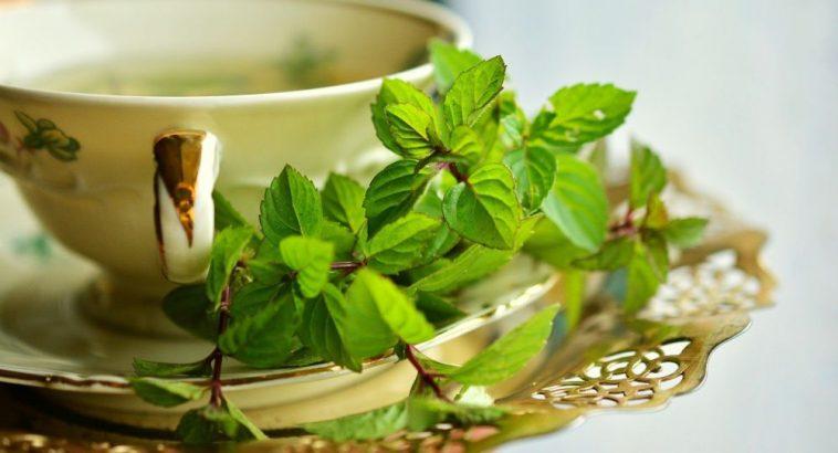 Не только мята и ромашка: какие растения помогут побороть стресс 1